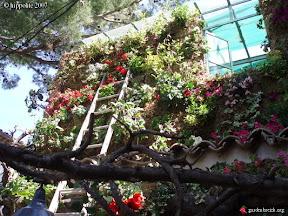 végétalisation du restaurant café sud place des Lices à st Tropez et un mur végétal sur la véranda