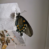 Houston Museum of Natural Science - 116_2872.JPG