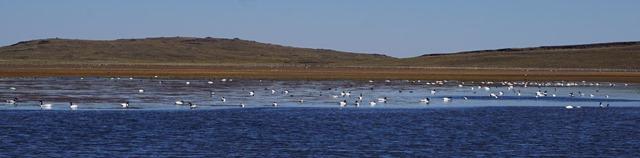 Laguna Tromen S