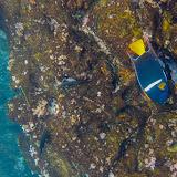 galapagos - Galapagos_FB_2-42.jpg