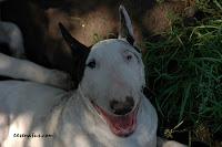 uśmiechnięta Zuza :)