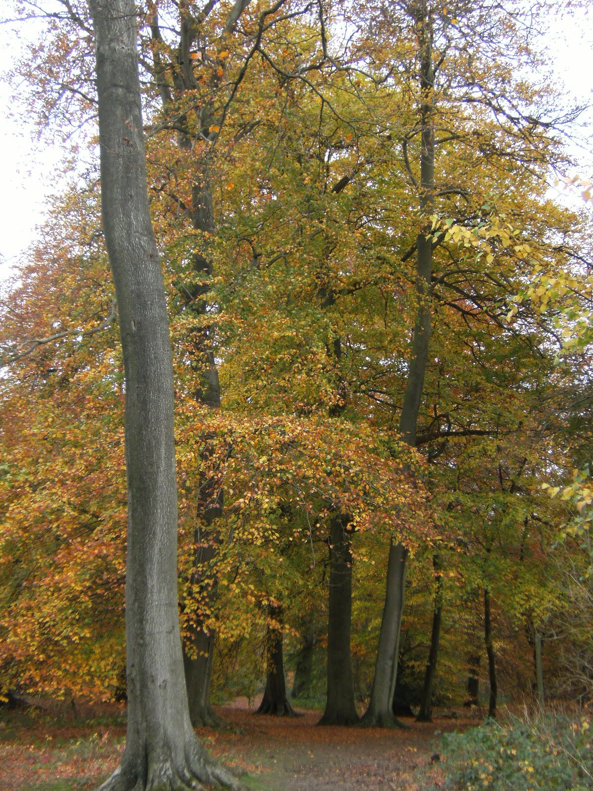 1011040018 Autumn colours in Quarry Wood