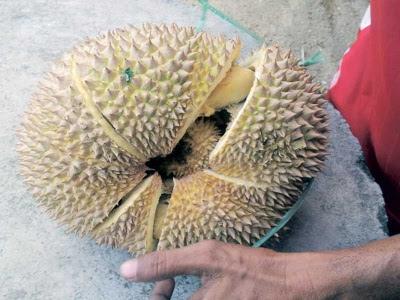 Peniaga terkejut 'durian dalam durian'