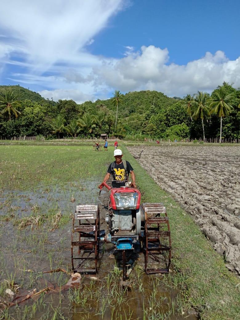 Olah Lahan Manfaatkan Alsintan Traktor Roda 2 Untuk Percepatan Tanam Padi di Kecamatan Tubo Sendana, Kab. Majene