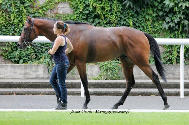 Photos Maisons-Laffitte 5-07-2015 IMG_2174