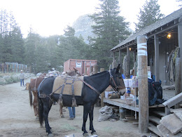 Loading our packs and gear onto the mules at Tuolumne stables. No better way to get your pack into the back country!