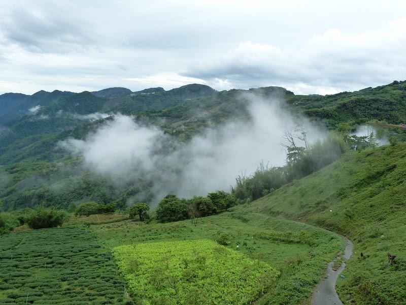 TAIWAN  Dans la region d ALISHAN - P1130716.JPG