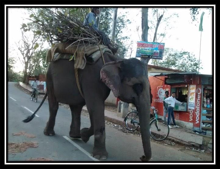 Betla Forest - Elephant Safari