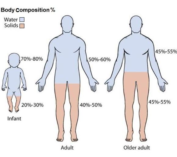 Qual è La Vera Percentuale Di Acqua Nel Corpo Umano The Pollo Web