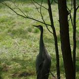 05-11-12 Wildlife Prairie State Park IL - IMGP1604.JPG