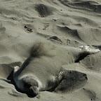 Genieten van een zandbad