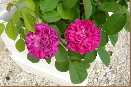 Spring flowers9o