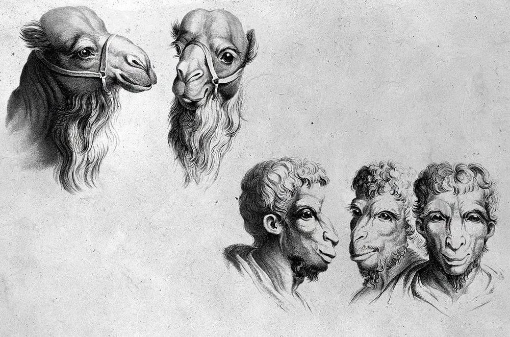 charles-le-brun-physiognomic-heads-5