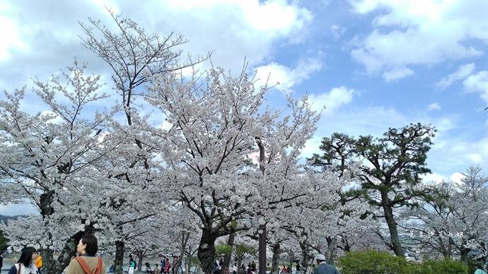 17 京都 嵐山渡月橋 賞櫻 櫻花 Saga Par 五色霜淇淋 彩色霜淇淋