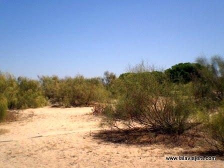 Parque Natural de la Ría Formosa, Algarve