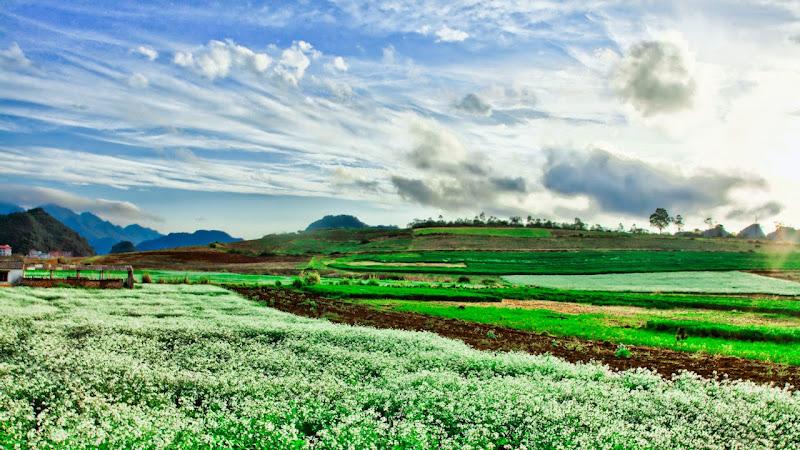 Cẩm nang du lịch - thời điểm đi Mộc Châu