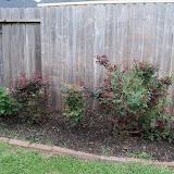 Gardening 2011 - 100_6809.JPG