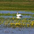 III Wiosenny Piknik z Ptakami 2012