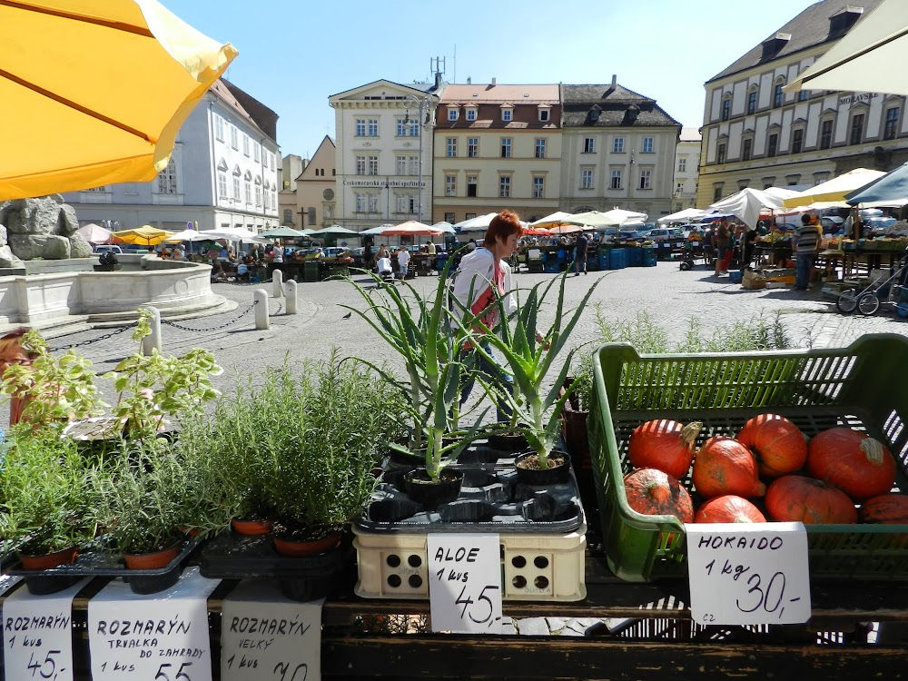 many kinds of fruits and plants for sale here