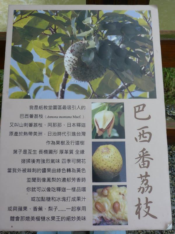 TAIWAN Dans la region de Wushe,au centre - P1140011.JPG
