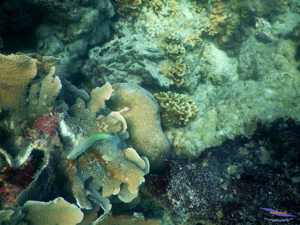 pulau pari, 23-24 mei 2015 46