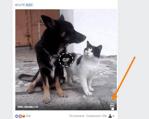 gif-facebook