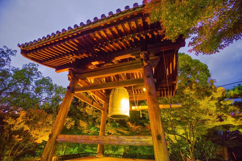 京都 高台寺 紅葉 ライトアップ 写真1