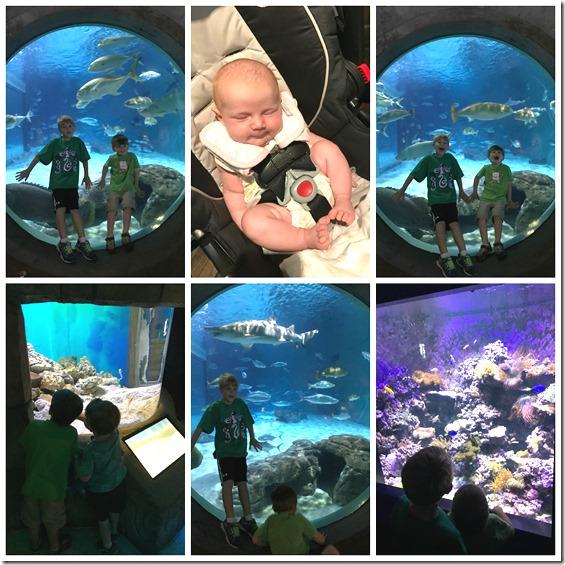 SB-aquarium2