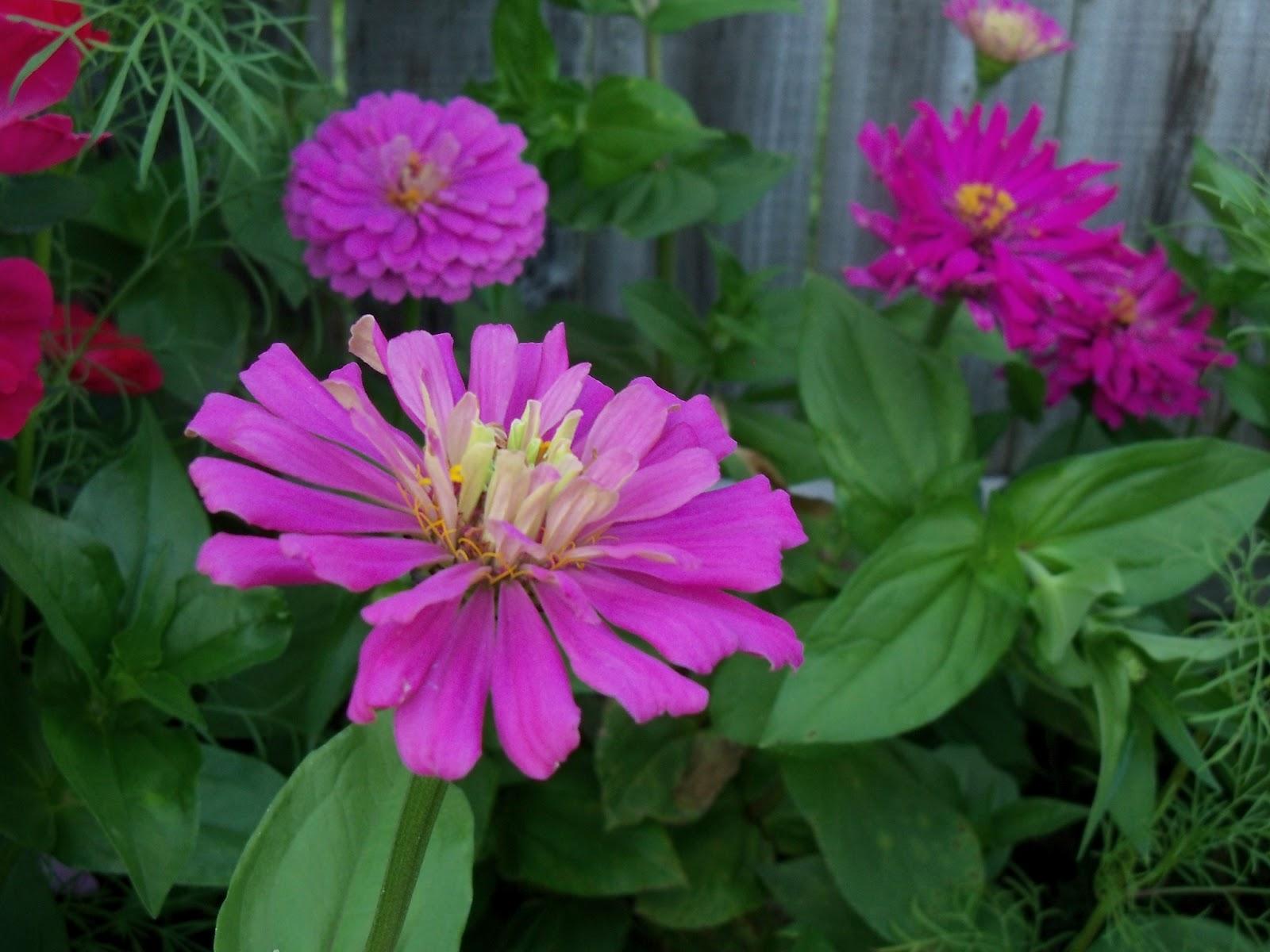 Gardening 2012 - 115_2402.JPG