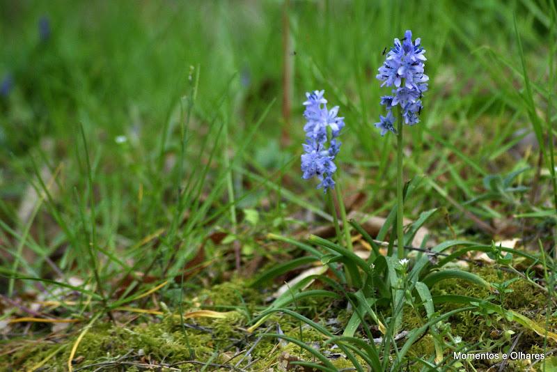 Primavera em Tons de Azul