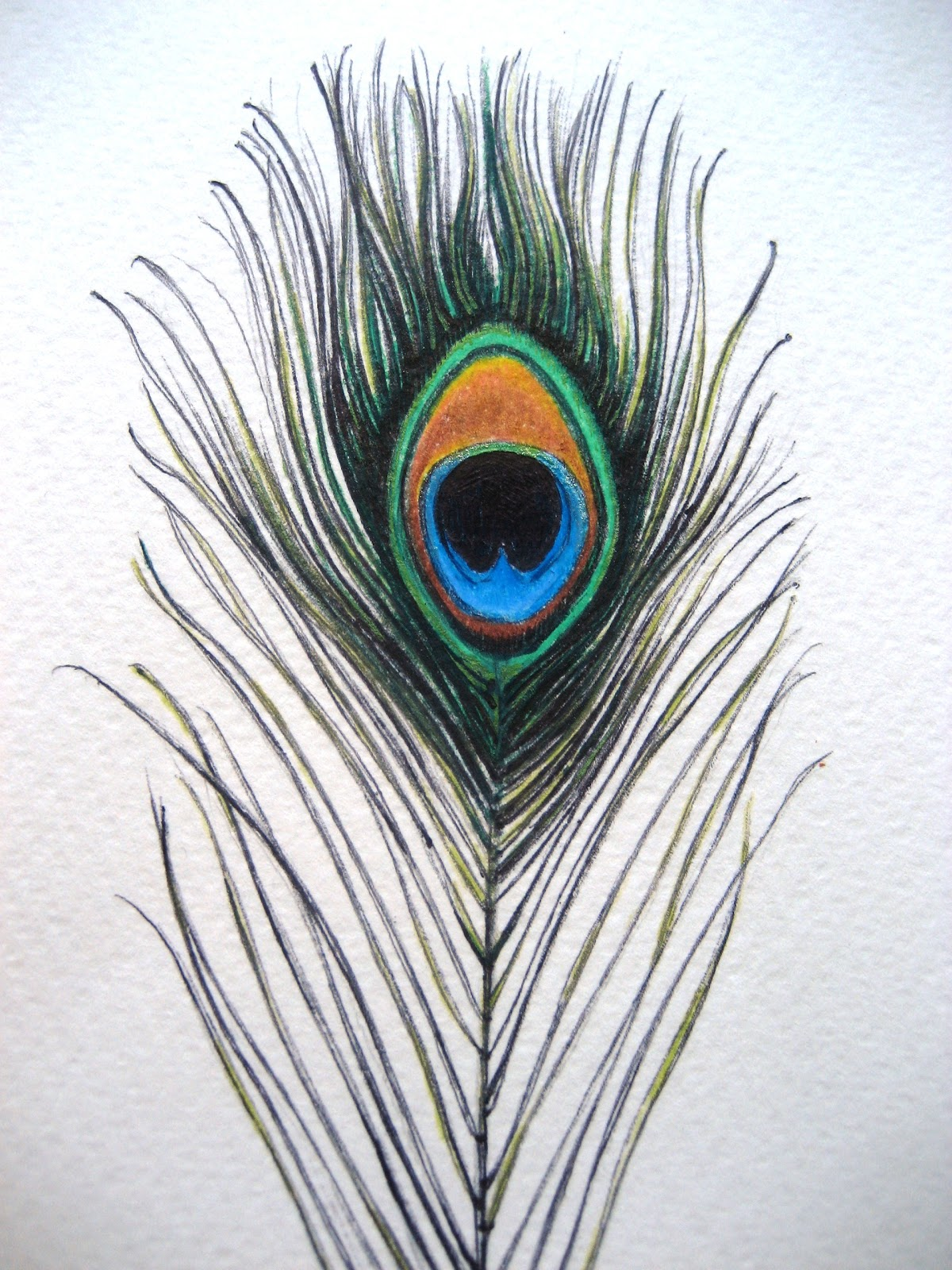 March 10, 2011 - Peacock Feather | A Drawing a Day for a Year