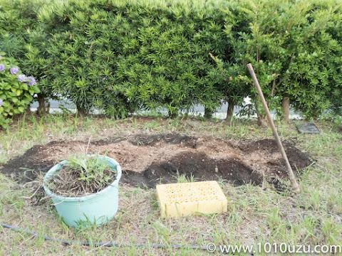 地下茎を取り除き耕して肥料を入れる