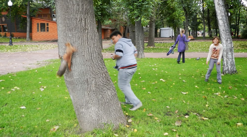 delighted children chase a terrified squirrel up the tree, hahaha!