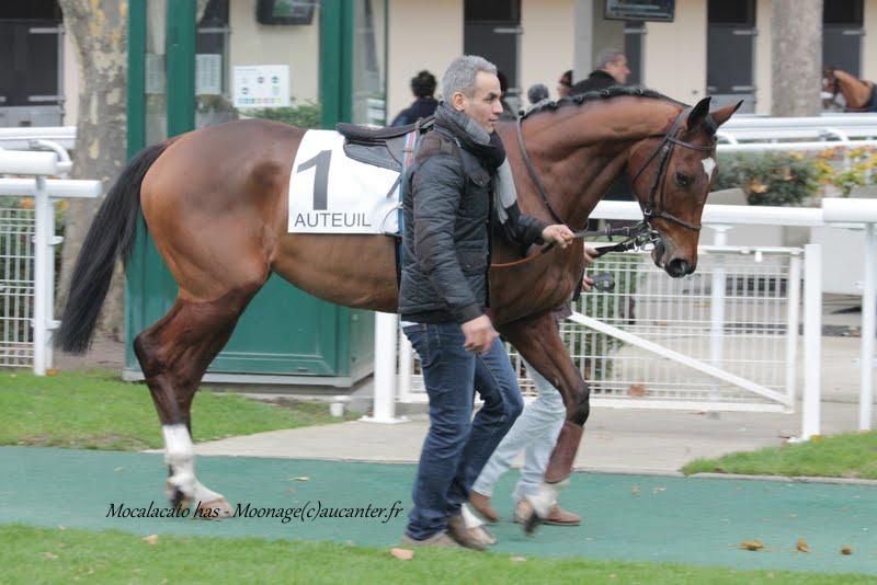 Photos Auteuil 29-11-2015 IMG_7401