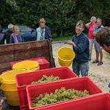 Petites vendanges 2017 du chardonnay gelé. guimbelot.com - 2017-09-30%2Bvendanges%2BGuimbelot%2Bchardonay-218.jpg