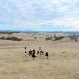 Oakdale Field trial Club California Championships