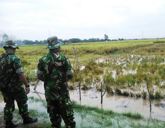 Areal tanaman padi di Desa Banjaransari dan Bendo terendam luapan sungai Madiun setinggi lutut orang dewasa.