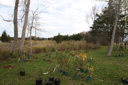 Hammo Fall Planting - Jim Murtagh - BC3G2518.jpg