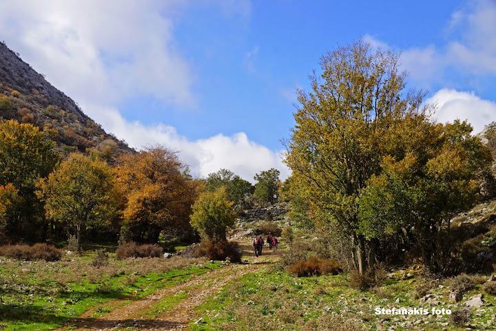 Δάσος Αραβάνες
