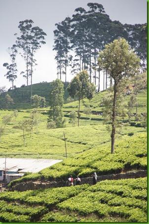 Sri langka101