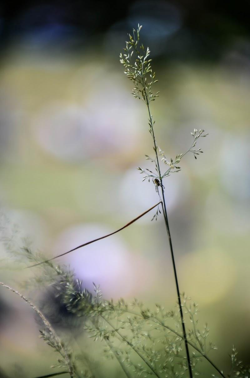 Spider friend di Monaci.marco_ph