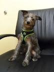 Clover-Carroll-veterinarian-Derry-New-Hampshire-NH.jpg