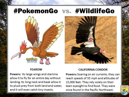 pokemongo-vs-wildlifego-4