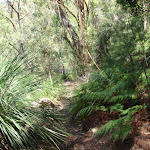 Ferns on Warrimoo Track (118207)