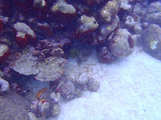 There is a mean looking moray eel poking out its head at us- we were afraid to get much closer