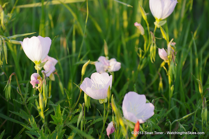 2013 Spring Flora & Fauna - IMGP6338.JPG