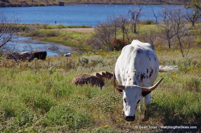 11-09-13 Wichita Mountains Wildlife Refuge - IMGP0413.JPG