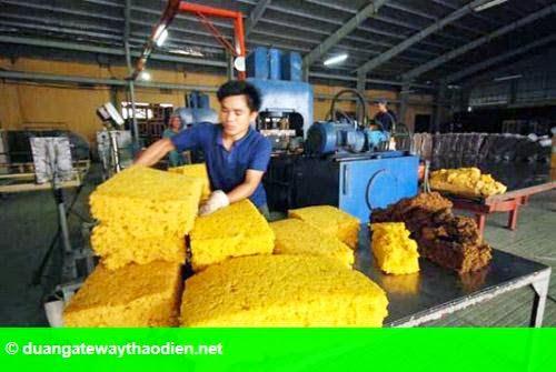 Hình 1: Doanh nghiệp sản xuất cao su gặp khó