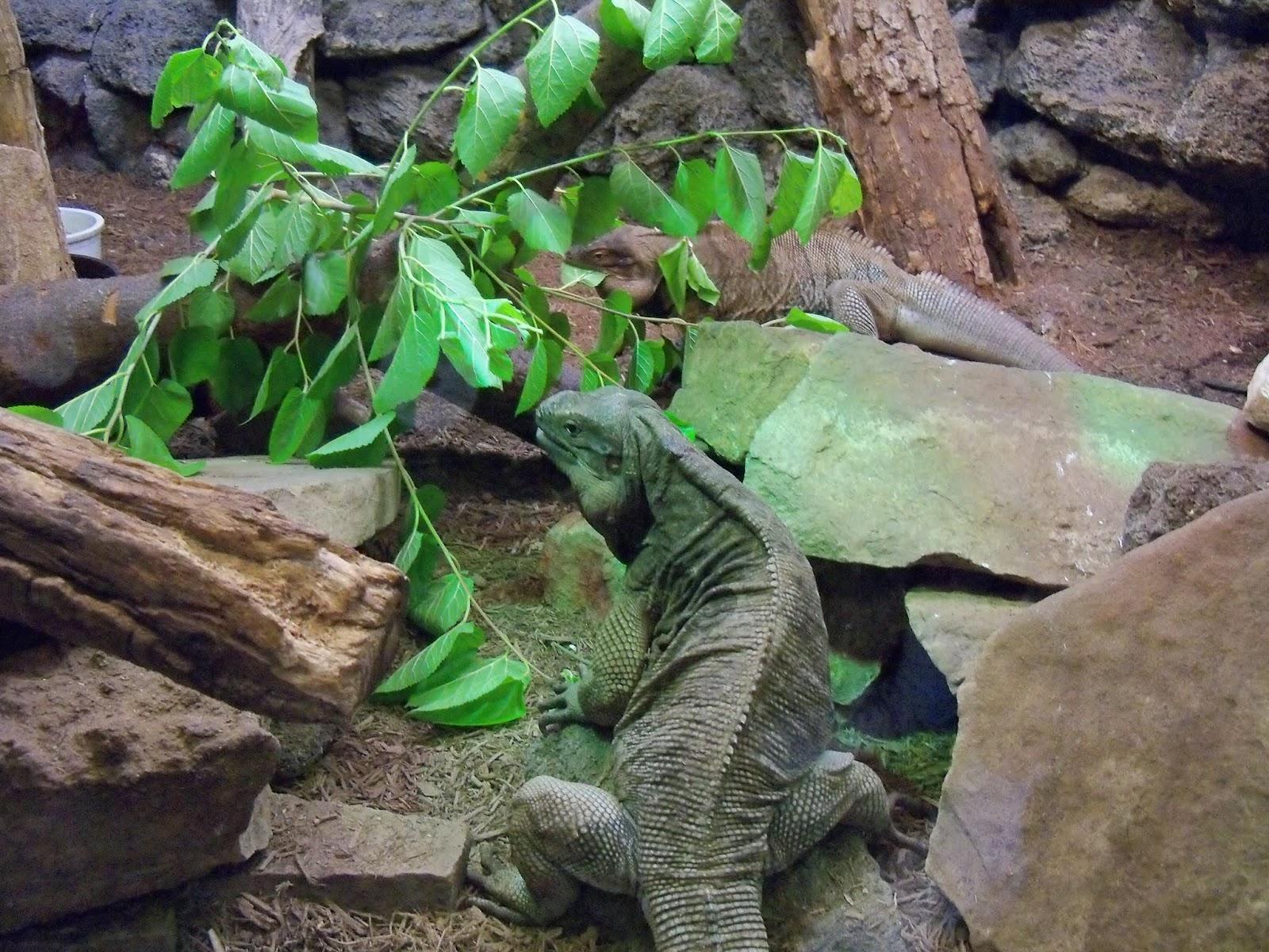Houston Zoo - 116_8405.JPG