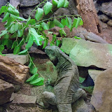 Houston Zoo - 116_8405.JPG